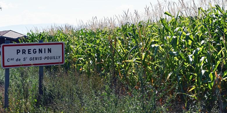 image-intro_pesticide.jpg